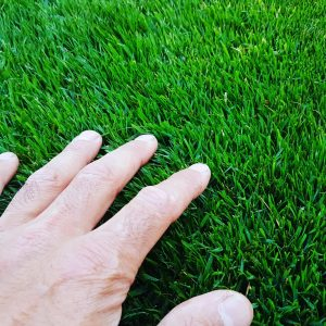 Lawn care in bearsden