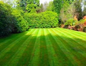 Bearsden lawn