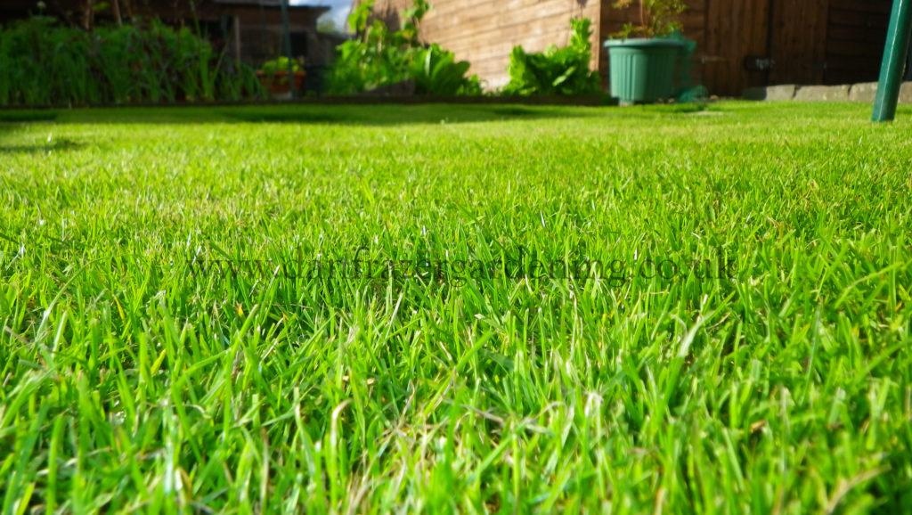 Bishopbriggs lawn care