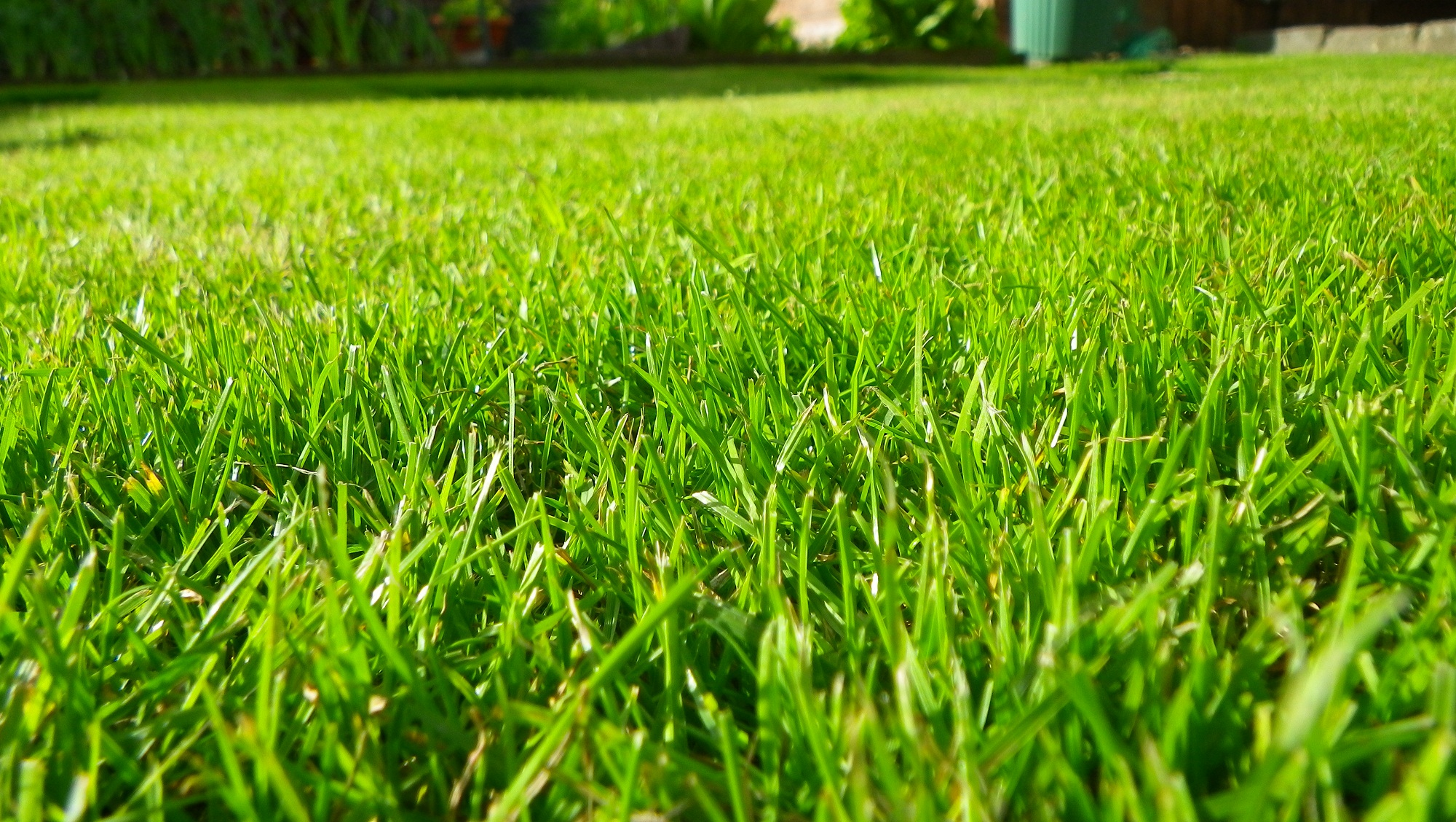 Glasgow grass cutting