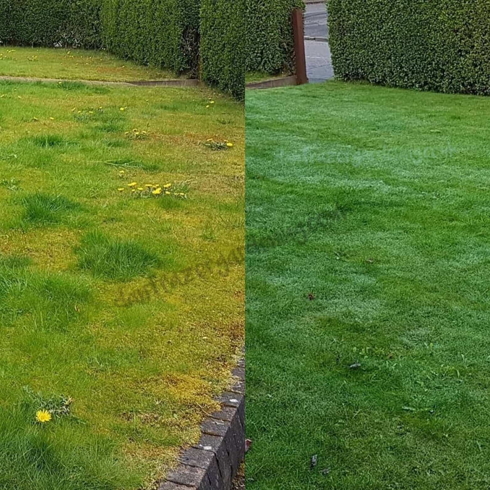 Bishopbriggs lawn treatment